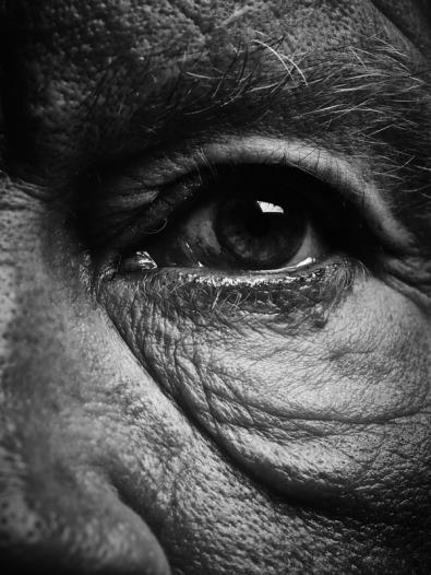 Bill_Brandt___Eyes_(date),_2014_b