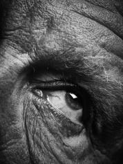 Bill_Brandt___Eyes_(date),_2014_d