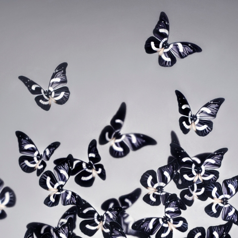 Papillon_Detail-1